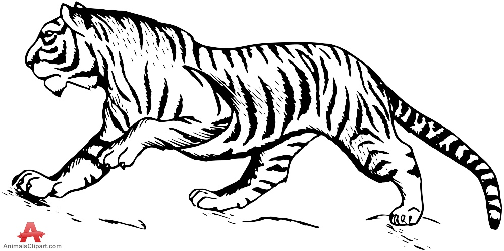 999x498 Tiger Black And White Cute Tiger Clip Art Free Clipart Images