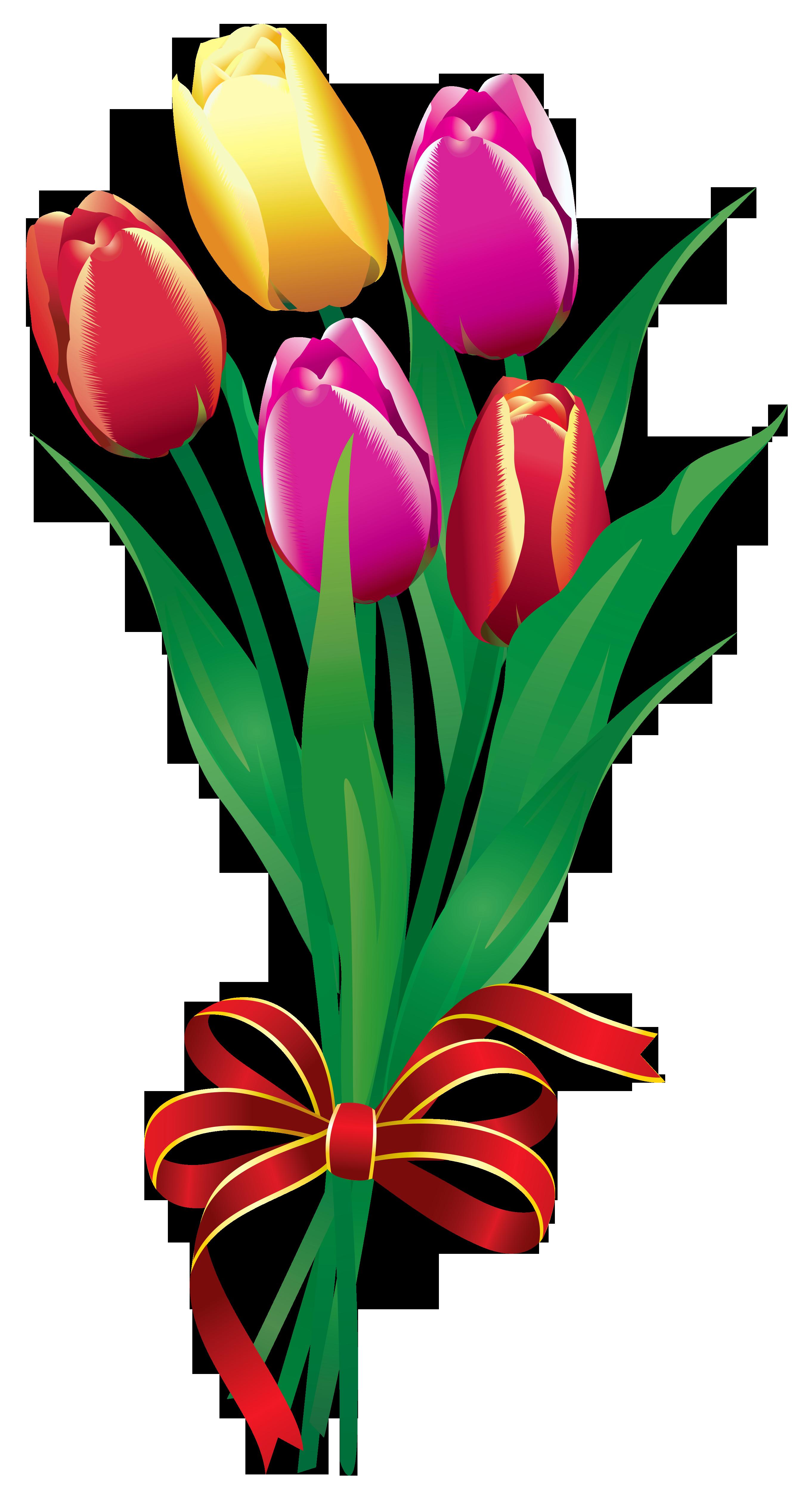 2720x5072 Tulip Clipart Tulip Bouquet