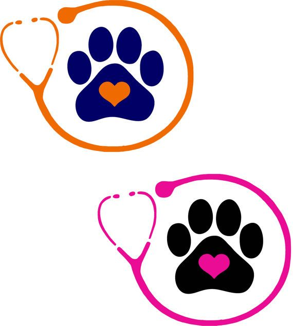 570x635 Paw Clipart Veterinarian Office