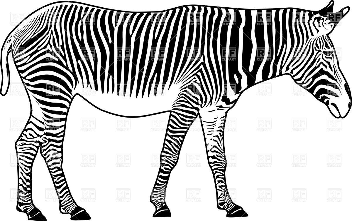 1200x752 Zebra