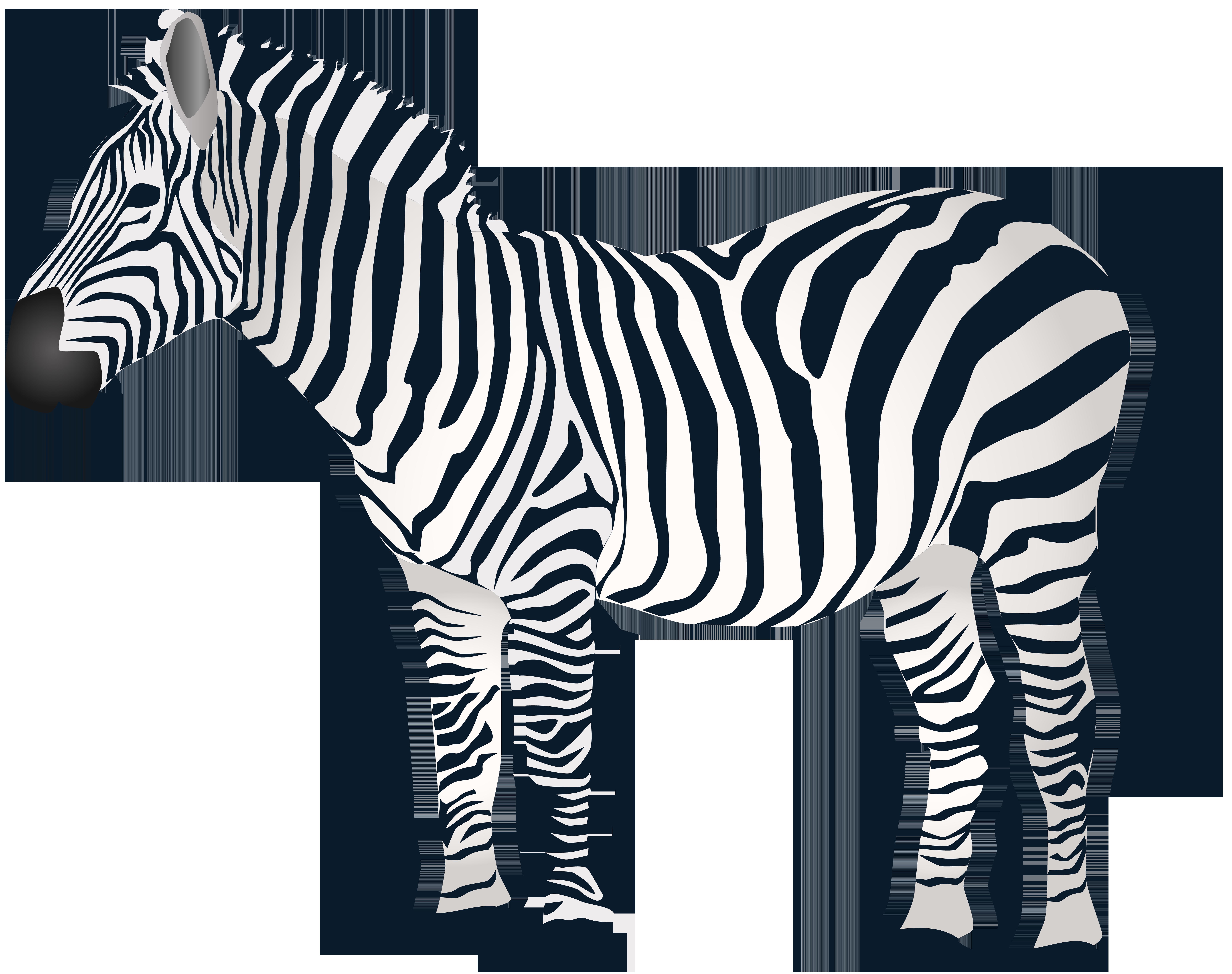 8000x6326 Zebra Png Clip Artu200b Gallery Yopriceville