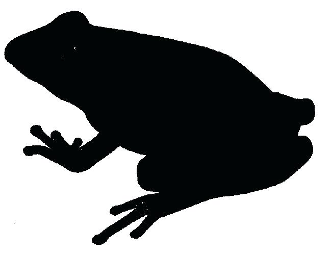 649x500 Frogs Clipart Frog Jumping Frog Clipart Black And White Memocards.co
