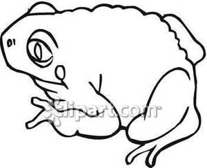 300x243 Toad Clipart Black And White