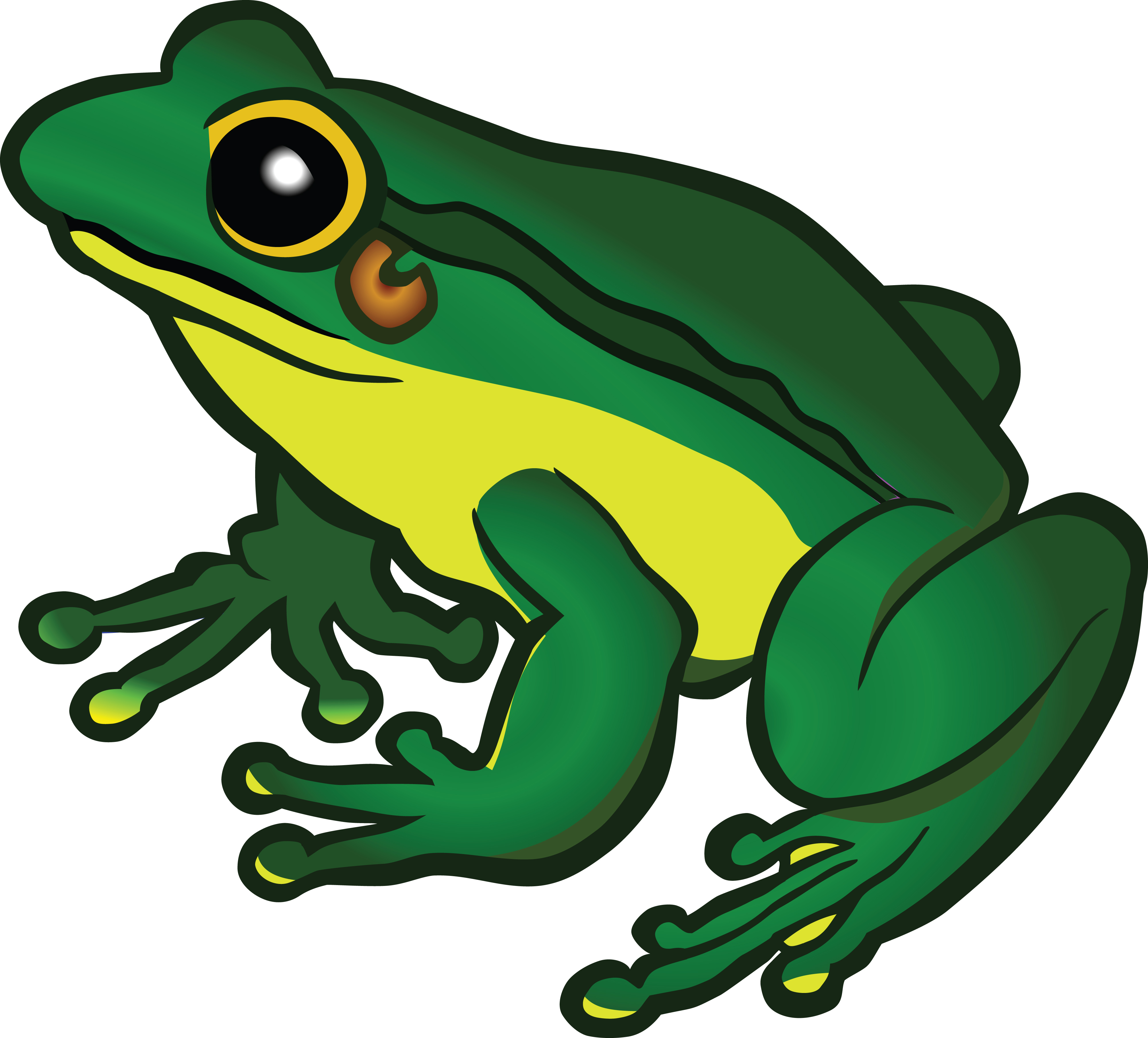 4000x3618 Clipart Of A Frog