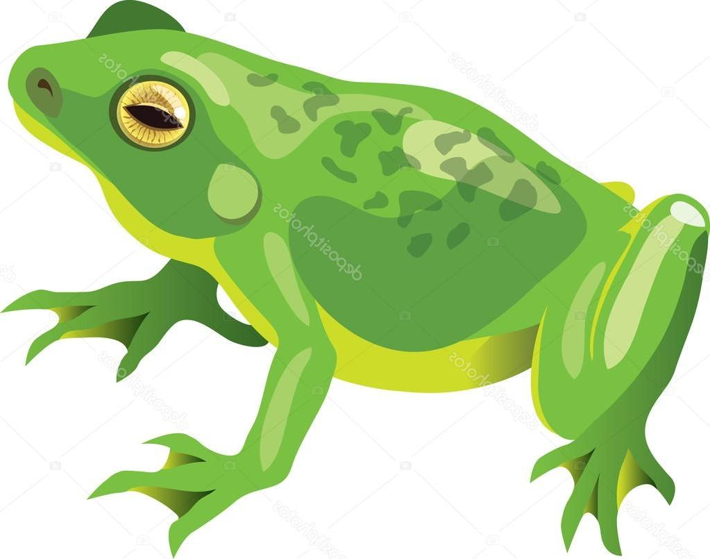 1023x805 Best Frog Vector Image Free Vector Art, Images, Graphics Amp Clipart