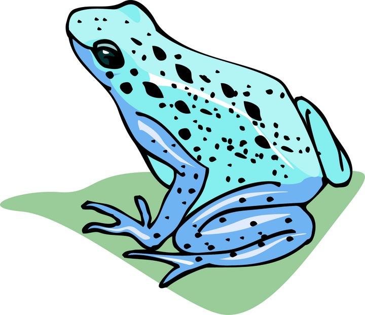 720x621 Top 88 Frog Clip Art