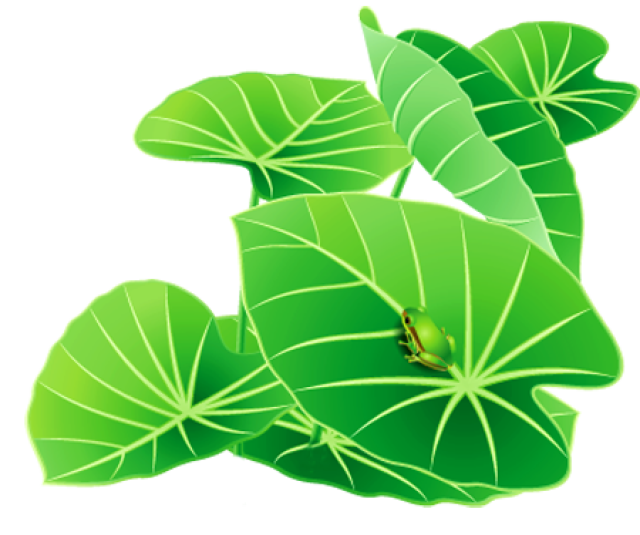 640x535 Free Frog On Lily Pad Clipart Image
