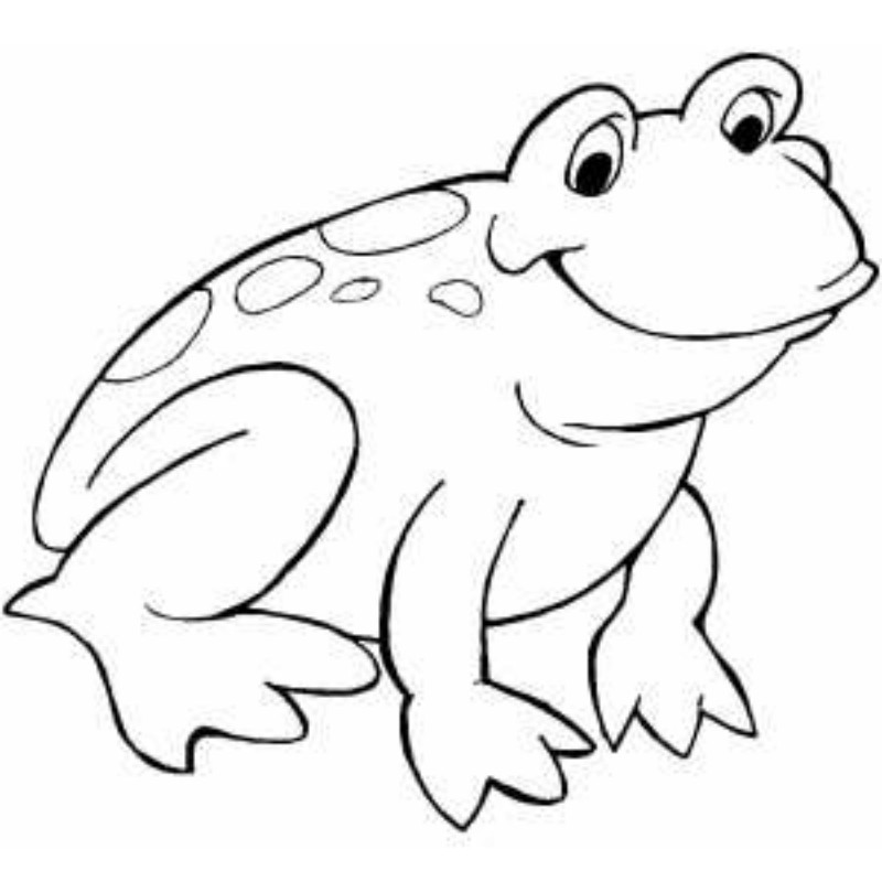 800x800 Frog Outline Template Many Interesting Cliparts