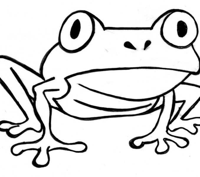 678x600 Outline Of Frog Kids Coloring