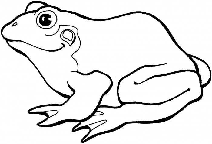 700x474 Frog Outline Coloring Pages
