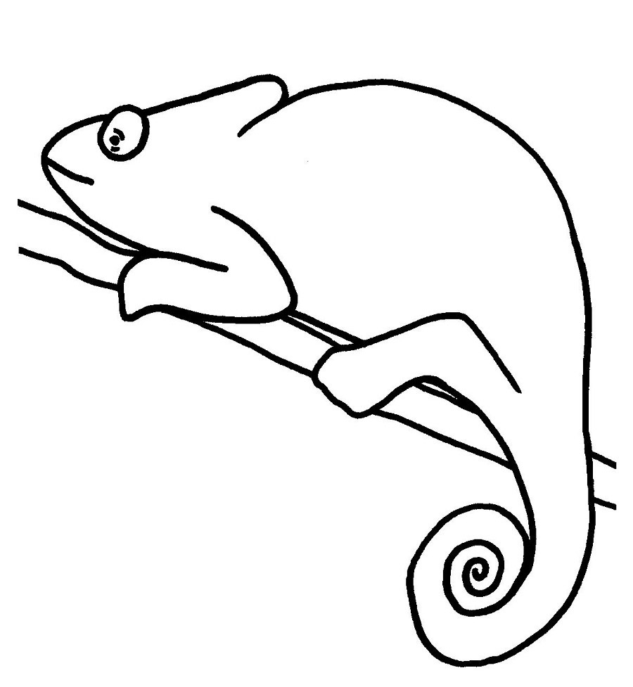 frog outlines  free download on clipartmag