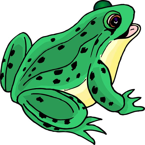 564x563 Best Frog Pictures Ideas Cute Frogs, Funny Frog