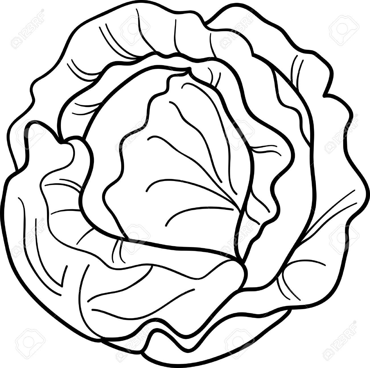 1300x1293 Cabbage Clipart Black And White