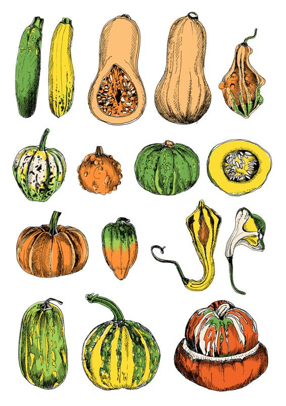 565x800 384 Best Vegetables Illustrations Images Veggies
