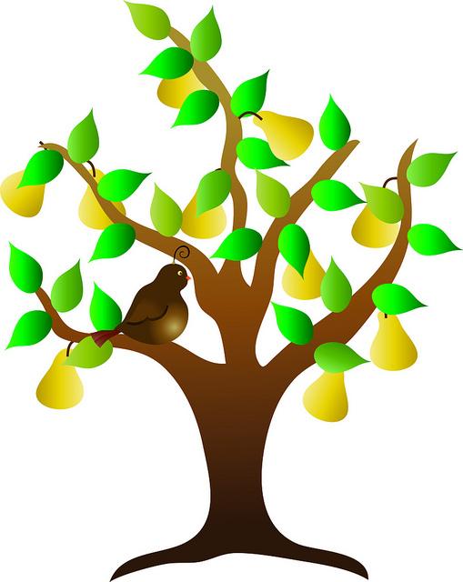 509x640 Fruit Trees Clipart