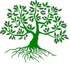 300x270 Fruit Tree Drawing