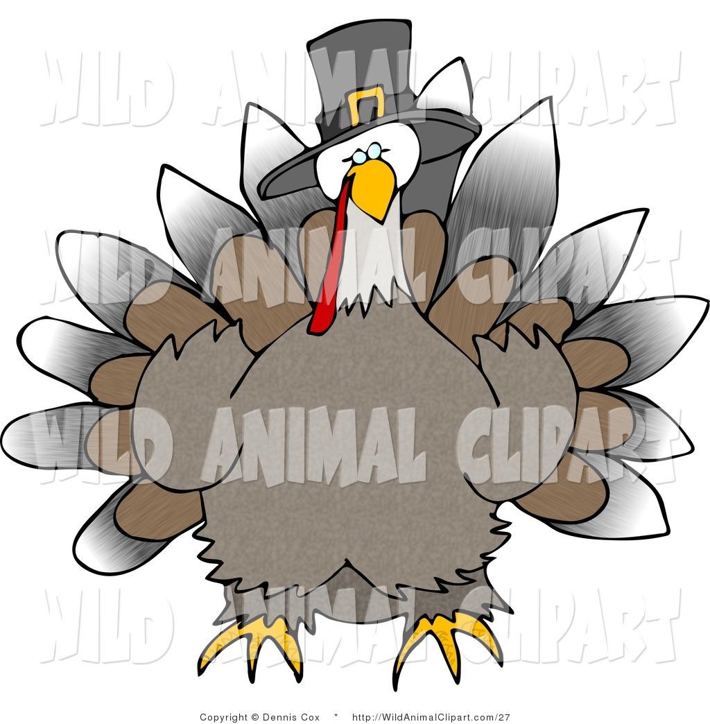 1024x1044 Royalty Free Turkey Stock Wildlife Designs