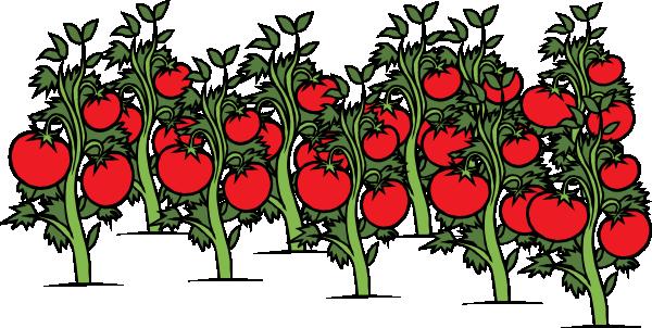 600x302 Tomato Patch Clip Art