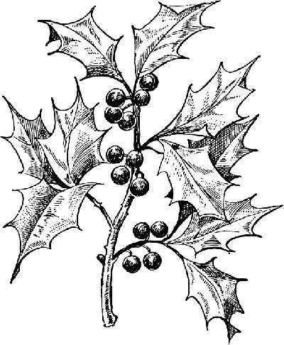 400x486 Black And White Holly Leaf Clip Art