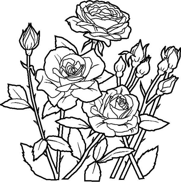 Garden Coloring Pages | Free download best Garden Coloring Pages on ...