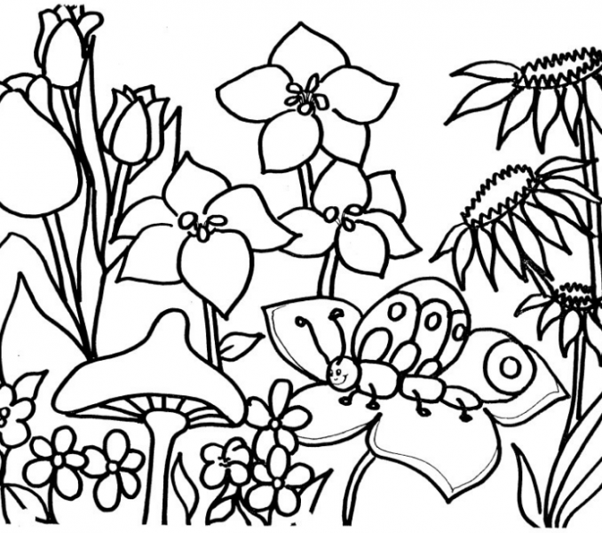 678x600 Flower Garden Coloring Page Flower Garden Coloring Pages Car