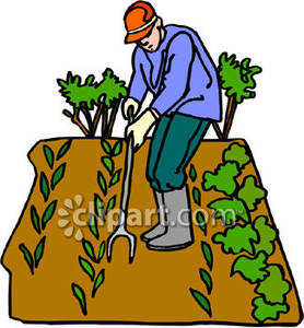 278x300 Weeding A Vegetable Garden Royalty Free Clipart Picture