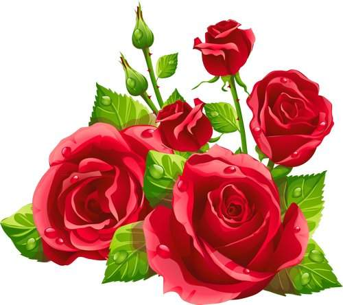 500x444 Clipart Psd Gentle Roses Download ( Transparent Background )