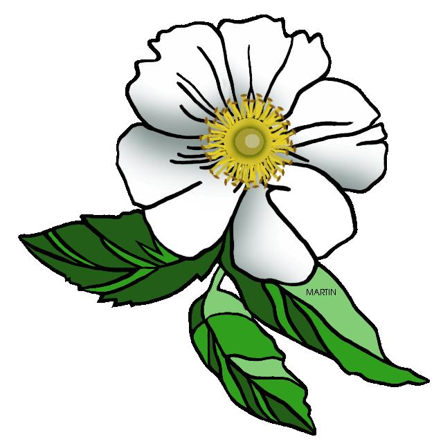 640x648 United States Clip Art By Phillip Martin, Georgia State Flower