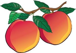 300x209 Peach Clipart Cartoon