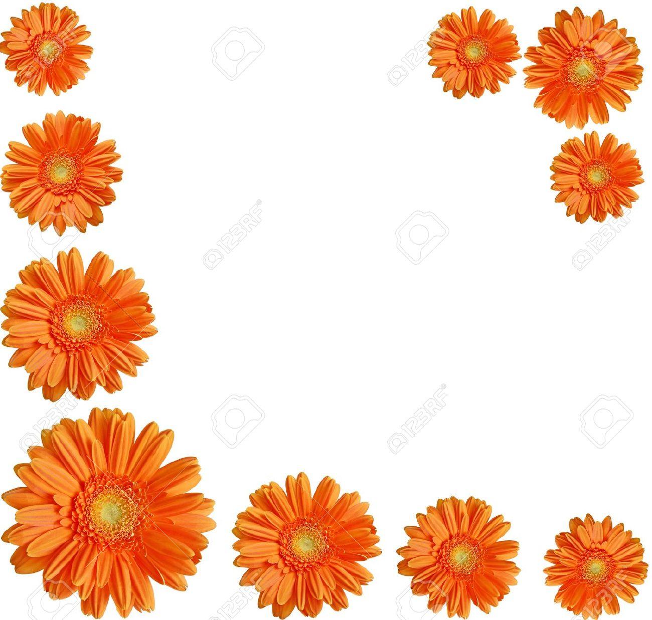1300x1237 Daisy Clipart Orange Flower