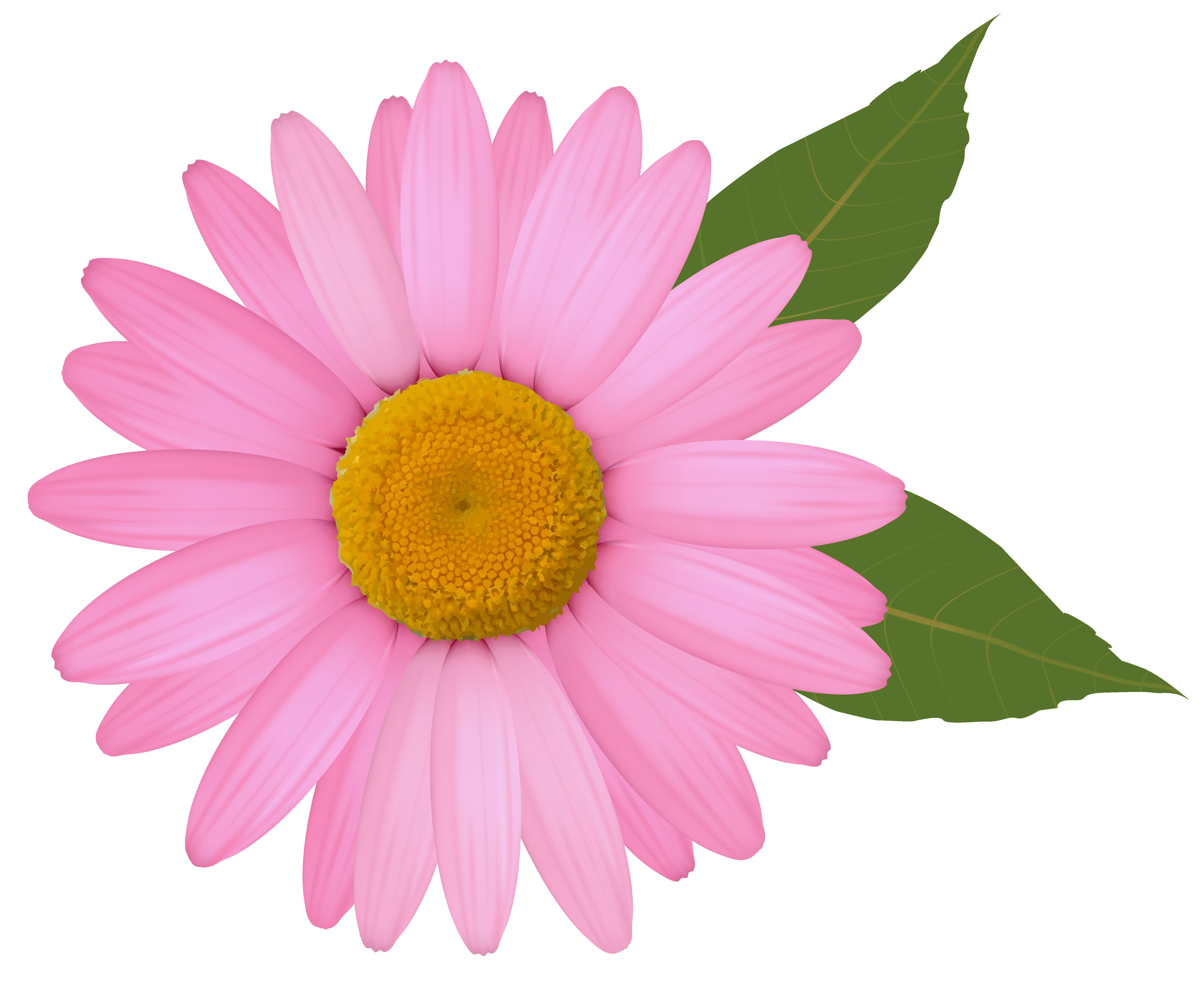 6006x4941 Daisy Clipart Colorful Daisy