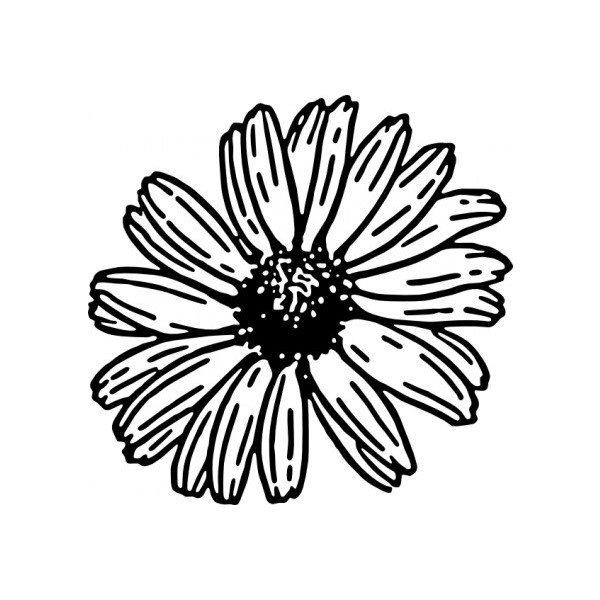 600x600 Daisy Clip Art Vector Clip Art Free Vector For Free Download