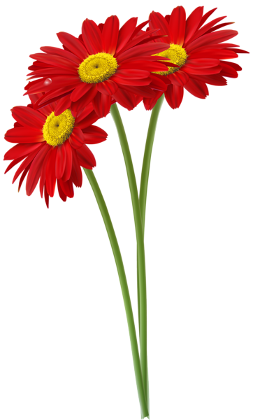 362x600 Red Gerbers Png Clipart Image Flowers Clipart