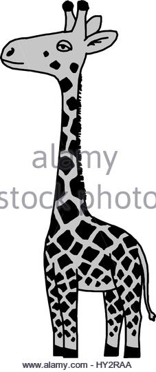 227x540 Cartoon Giraffe Black And White Stock Photos Amp Images