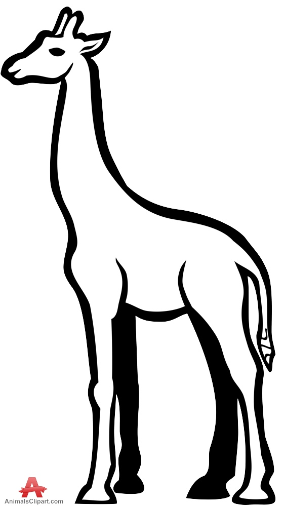 559x999 Giraffe Clipart Outline In Black And White Free Clipart Design