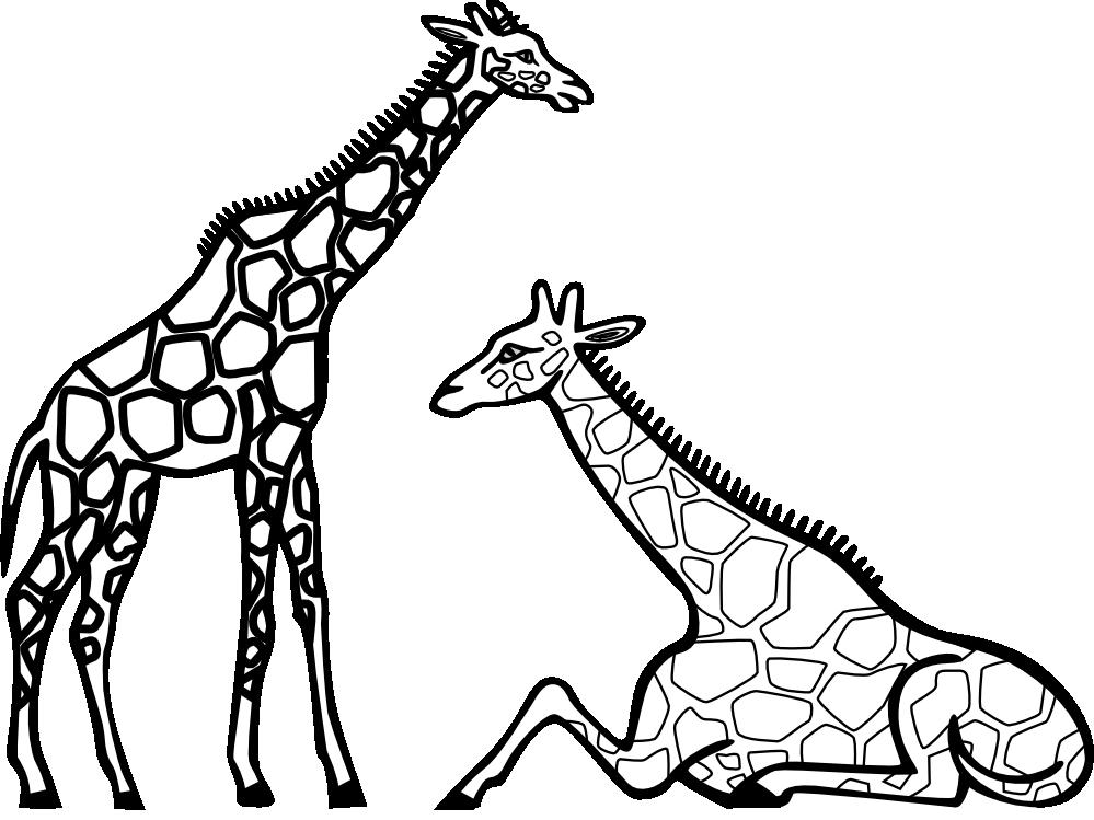 999x749 Black Amp White Clipart Giraffe