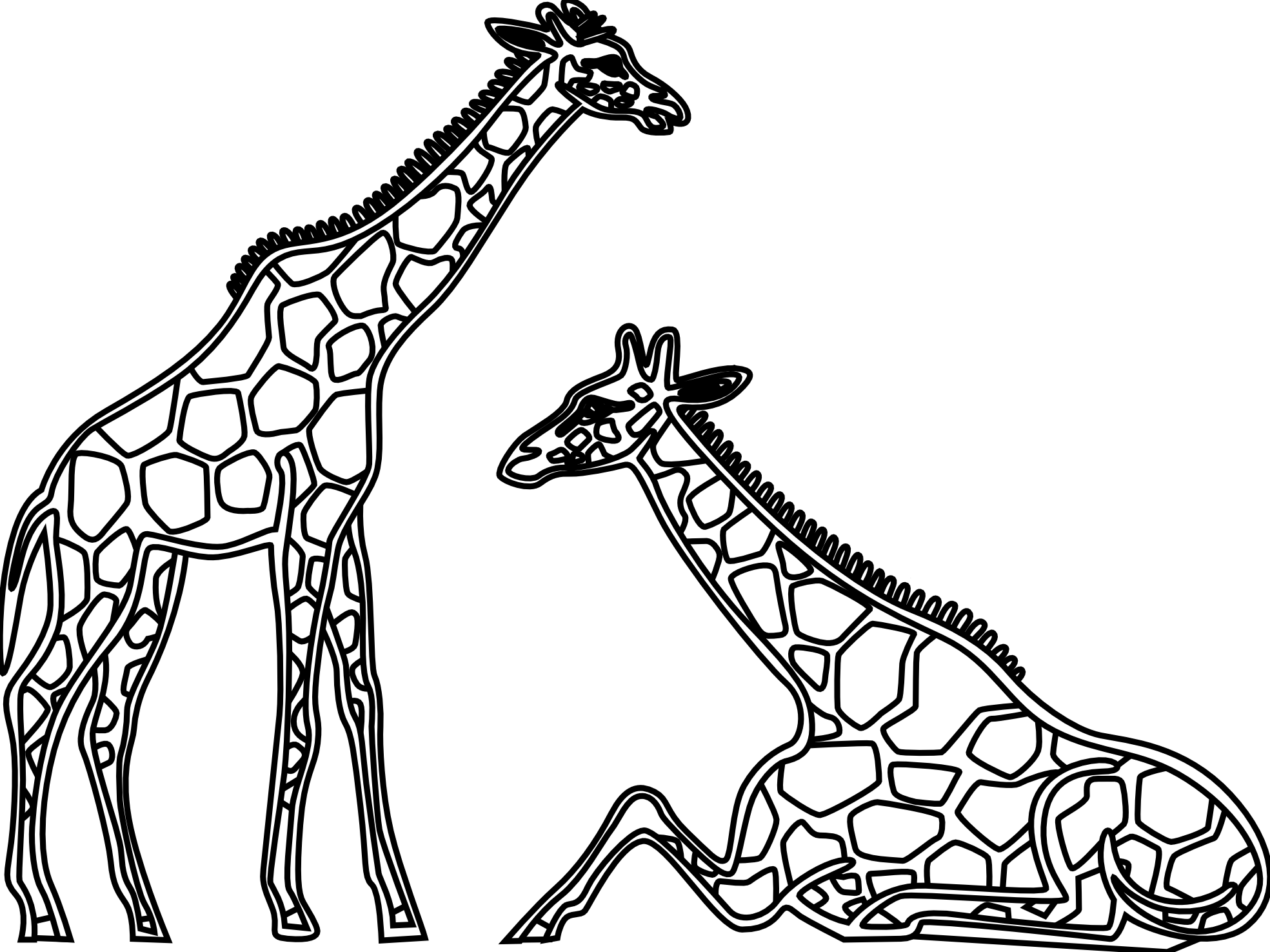 1969x1475 Giraffe Clipart Line Drawing