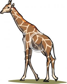 280x350 Royalty Free Giraffe Clip Art, Animal Clipart