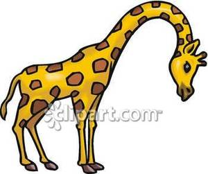 300x251 Giraffe Bending Its Neck