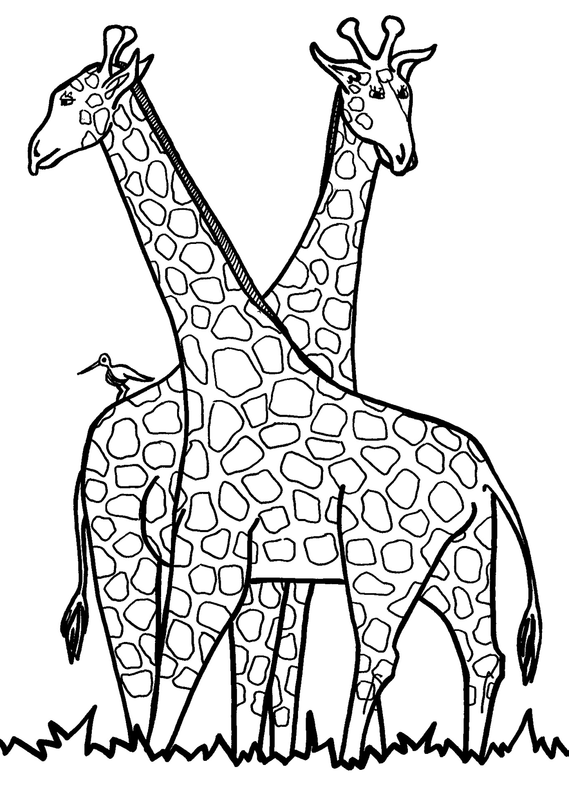 1134x1578 Giraffe Coloring Pages