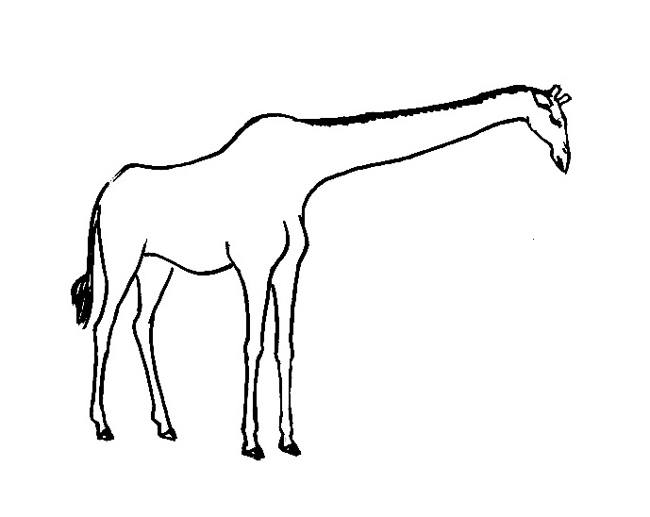 650x517 Giraffes Coloring Pages