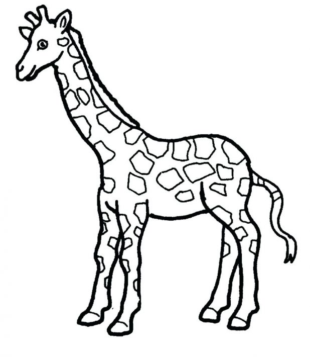 618x710 Baby Giraffe Coloring Page Bell Search Results Fun Pages Pdf