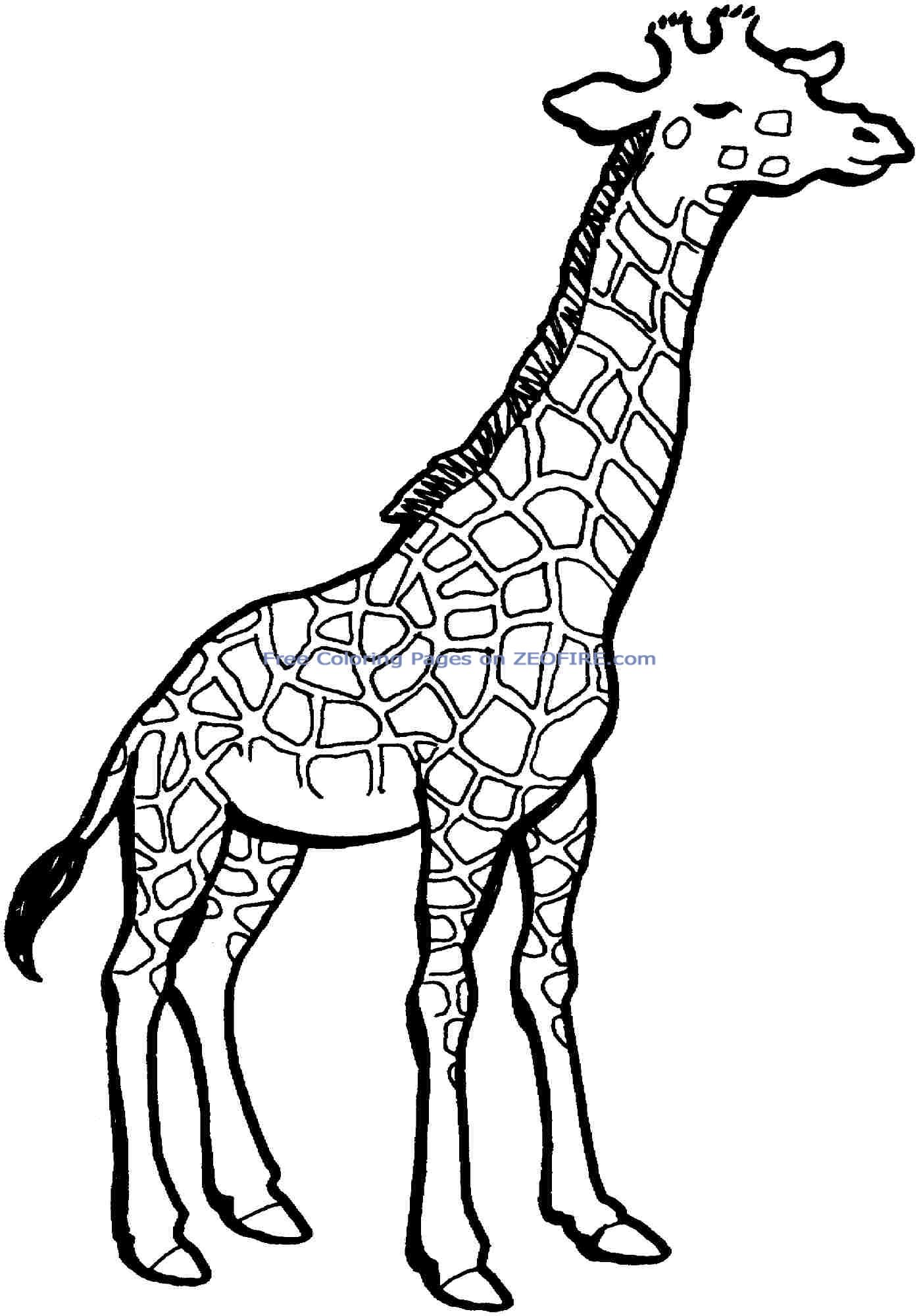 1397x2000 Best Giraffe Coloring Pages Free 2995 Printable
