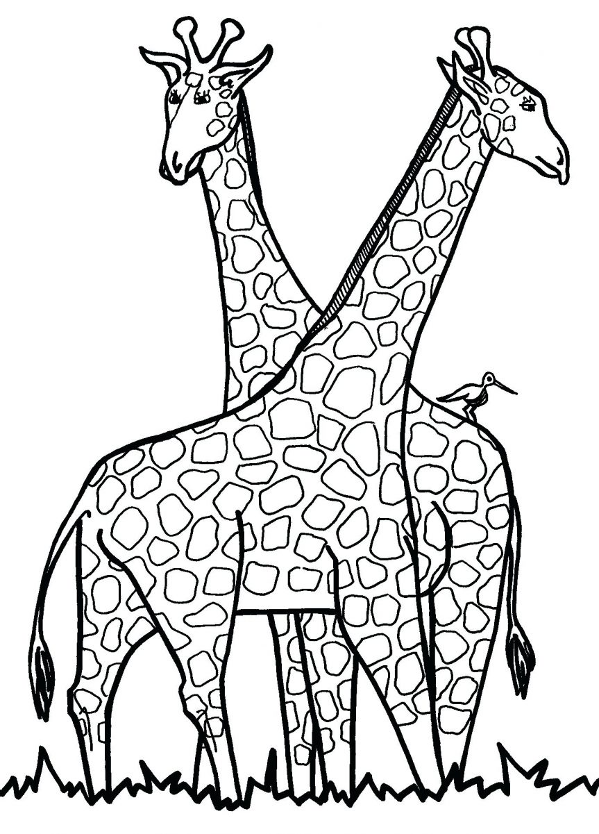 863x1201 Coloring Pages Fascinating Printable Giraffe. Free Printable