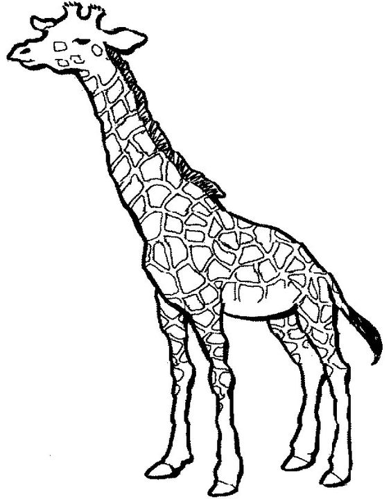 564x720 Giraffe Coloring Pages Coloringmates. Doodly Doo Fontaroo
