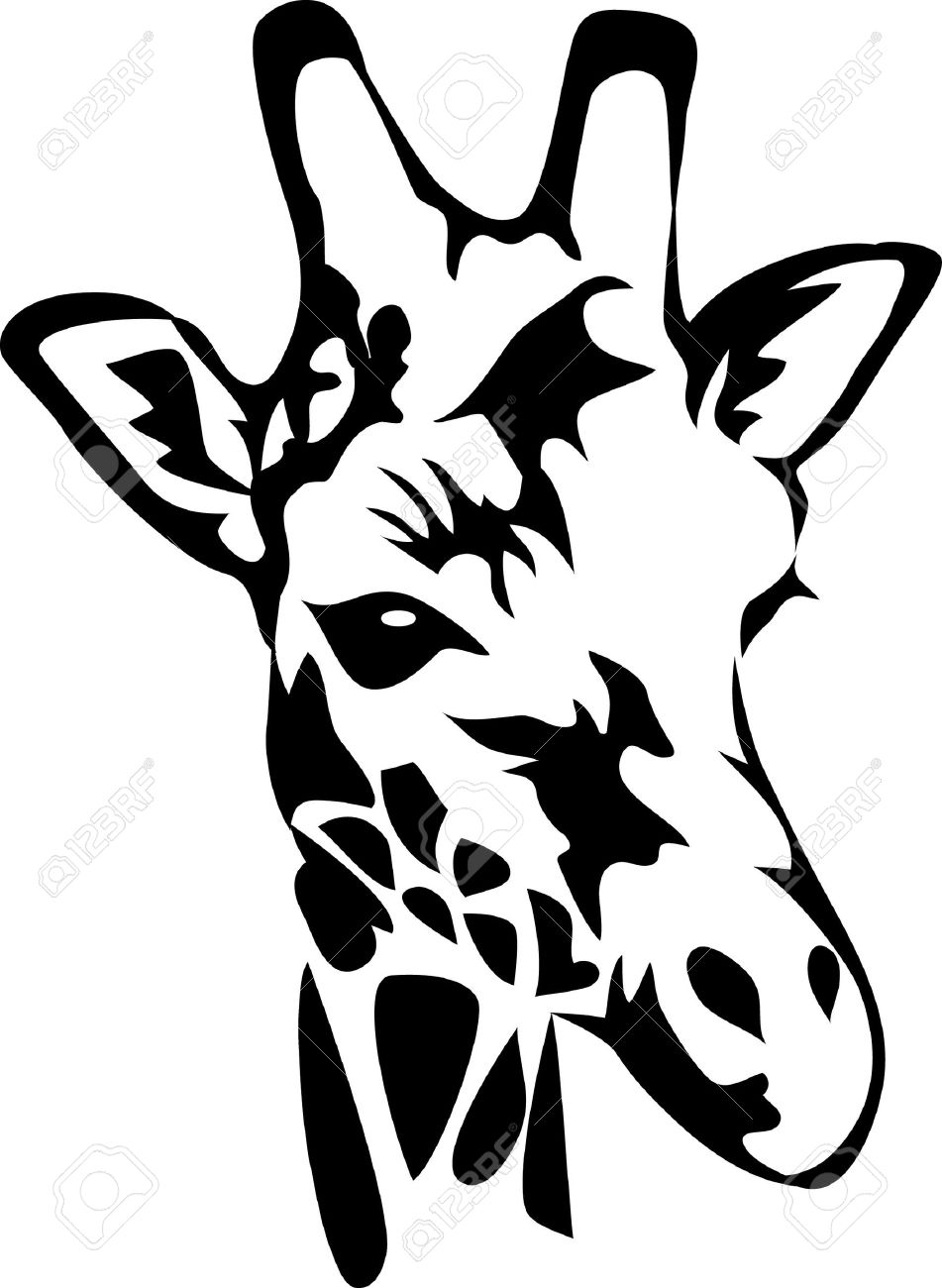 951x1300 Giraffe Face Drawing 2,183 Giraffe Head Cliparts, Stock Vector