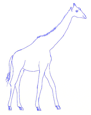 300x377 How To Draw A Giraffe