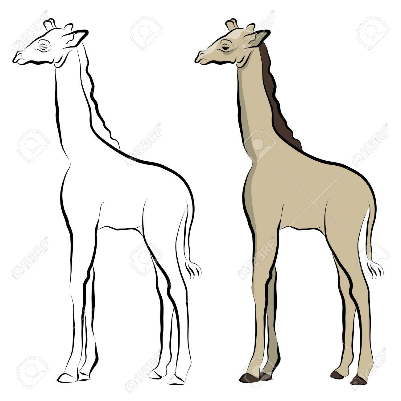 1300x1300 An Image Of A Giraffe Line Drawing. Royalty Free Cliparts, Vectors