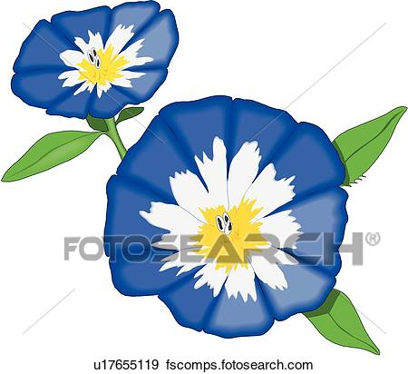 450x412 Clip Art Of Dwarf Morning Glory U17655119