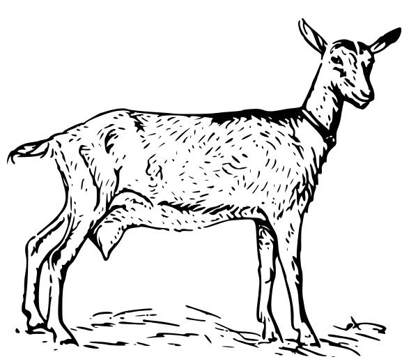 600x522 Goat Clip Art Vector Goat Graphics Image 3